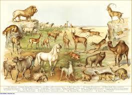 animals of the bible jewishencyclopedia com