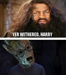 Harry Potter Funny Memes - funny harry potter memes