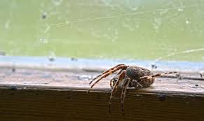 How To Keep Spiders Out Of Your Bed 8 Facts About The Misunderstood House Spider Mnn Mother Nature