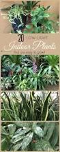 Low Light Indoor Flowers Best 25 Low Maintenance Indoor Plants Ideas On Pinterest Low