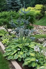 native plants to illinois 16 best native plants at warren newport public library images on