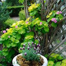 Flower Shrubs For Shaded Areas - southern california gardening plants for dry shady areas