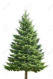 a model pine tree forest 7 43 artisanvideos