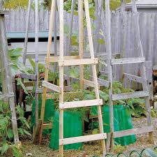 Tomato Cage Milk Jug Witch Tomato Cage Uses Pinterest by Best 10 Tomato Cage Ideas On Pinterest Staking Tomato Plants