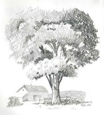 sketching trees with pencil 1000 images about how to draw