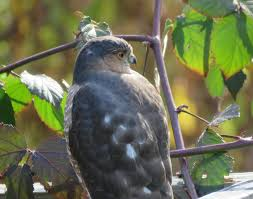 november 2015 u2013 amy u0027s birds