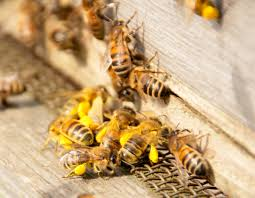 beekeeping tips from experienced apiarists habitat network