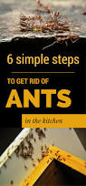 How To Get Rid Of Small Ants In Bathroom 6 Simple Steps To Get Rid Of Ants In The Kitchen