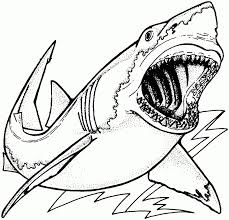 realistic animal coloring pages realistic sea animals coloring pages images for u003e realistic sea