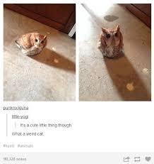 Weird Cat Meme - what a weird cat animals know your meme