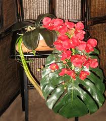 Red Orchids Tropical Waterfall Of Beautiful Red Orchids 13500