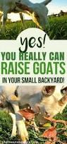 best 25 starting a farm ideas on pinterest small farm farms