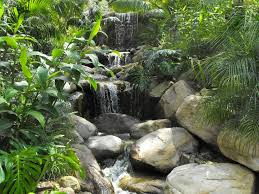 Garden Waterfall Ideas 23 Best Herbs And Foliage Images On Pinterest Water Features