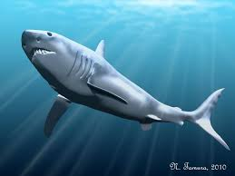 biggest megalodon shark 10 interesting facts about megalodon