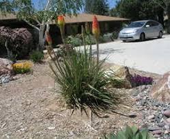 desert landscape ideas landscape rustic with garden art garden