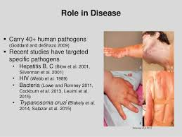 Bed Bugs Disease Bed Bug Biology And Research By Dr Susan Jones At Cobbtf Summit 2015