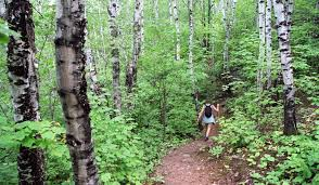 Flagging Companies In Oregon Whatever Your Trail Smarts Stay Wise In The Woods Startribune Com