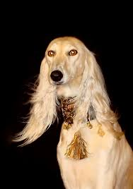 afghan hound collars uk saluki dog collar the decorated critter pinterest dog