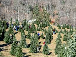 christmas tree farm about more than a tree