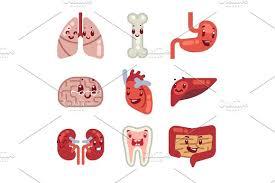 Cartoon Human Anatomy Cute Cartoon Internal Organs Vector Icons Illustrations