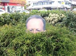 press sec spicer cutouts available to decorate bushes ny