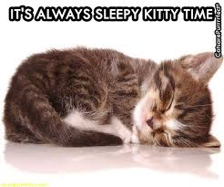 Sleepy Cat Meme - it is kitty sleepy time always kitty cat kittens see funny