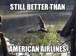 Racoon Meme - weekly meme contest winners raccoon mandatory