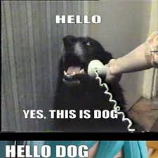 Meme Surprise - surprise dog by austyn meme center