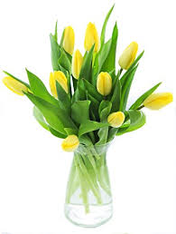 yellow vase kabloom 10 yellow tulips fresh from with vase