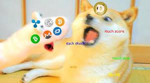 Much Wow Meme - much shock such wow dogecoin