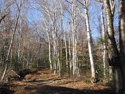 Vermont forest images Sterling forest trails trail finder jpg