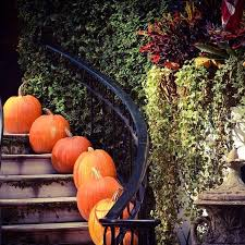 59 best it s fall y all images on