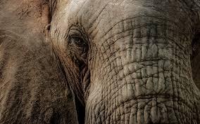 elephant images free download u2013 wallpapercraft