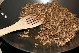 cours de cuisine oise atelier cuisine avec insectes comestibles dans l oise 60 wonderbox