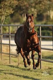 Black Mustang Ranch Pilot Point Texas Tapgun 2004 Gray Quarter Horse Stallion Horses Smoke