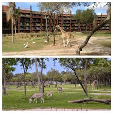 top 10 reasons to stay at animal kingdom lodge u0026 villas