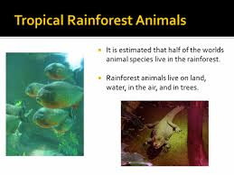 Dominant Plants Of The Tropical Rainforest - tropical rainforest animals names