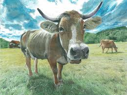 beautiful creatures grayscale coloring book cow coloring