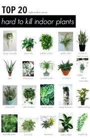best indoor house plants good indoor plant good house plants top indoor office plants best