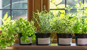 easy flowers to grow indoors that are easy to grow indoors