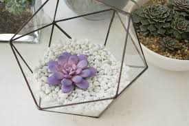 purple pink succulent fairy garden in cup ideas polymer clay