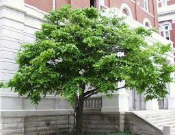 482 best trees and shrubs images on gardens small