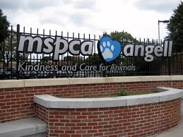 mspca angell wikipedia