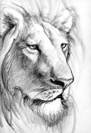 94 best lion art images on pinterest drawings cat art and drawing