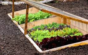 creating a garden and to protect against the wind u2013 tips and