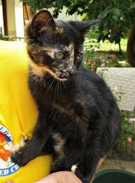 kittens chatons grande daze