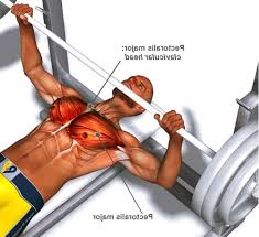 will bench press build chest militariart com