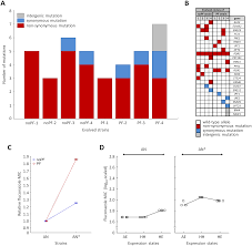 phenotypic heterogeneity promotes adaptive evolution
