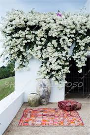 hydrangea paniculata picture more detailed picture about 50 pcs