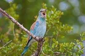 beautiful birds spring trees bird animal images hd bird hd 16 9